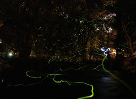 Fireflies_2