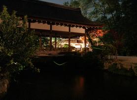 Fireflies_3