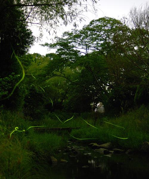 Fireflies_3_1