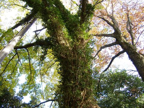 Trees_3_1